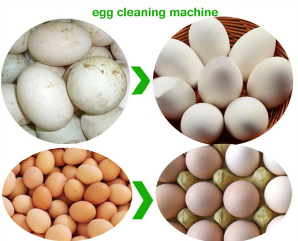 Application of Egg Washing Machine
