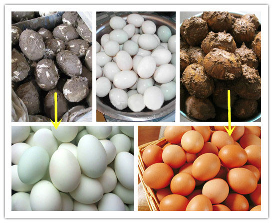 Applications of Egg Washing Machine
