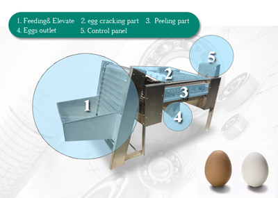 Automatic Chicken Eggs Peeling Machine Description