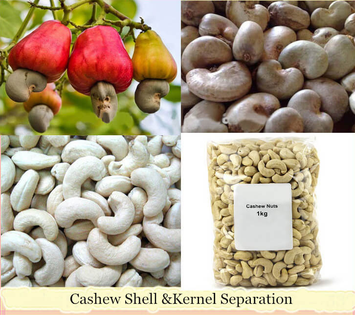 Cashew Shell &Kernel Separating