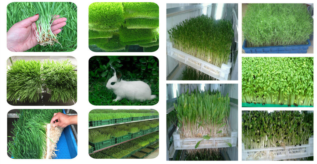 animal feed hydroponics production system application
