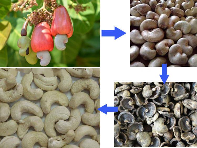 cashew shelling