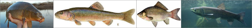 fish types can be processed by fish scaling machine
