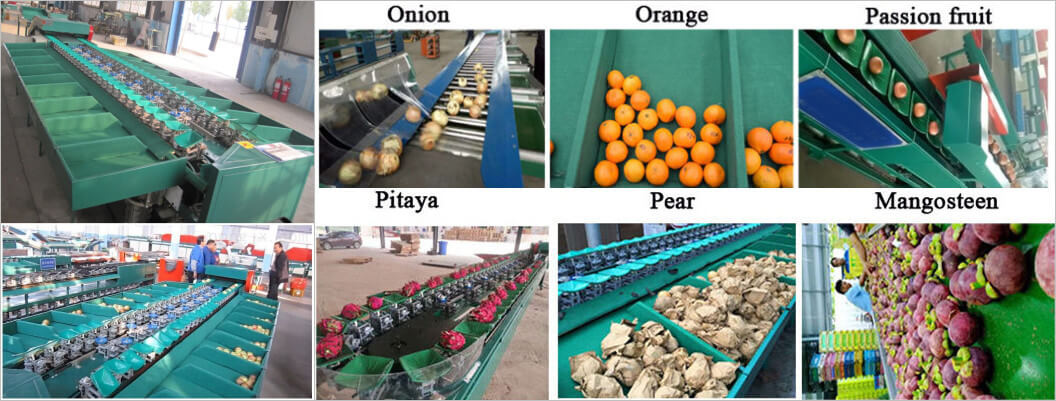 fruit sorting machine application