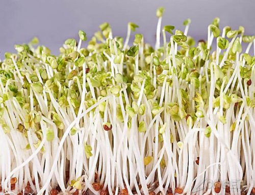 How to Grow Bean Sprouts in Sprout Machine?